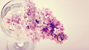 Lilac branch in a glass. Royalty Free Stock Photos