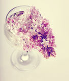 Lilac branch in a glass. Stock Photography