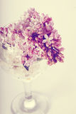 Lilac branch in a glass. Stock Photos