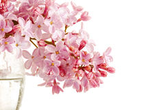 Lilac branch in a glass. Royalty Free Stock Photography