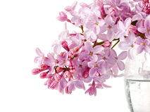 Lilac branch in a glass on a white background. Stock Photography