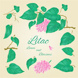 Lilac branch and leaves and flowers vector Royalty Free Stock Image