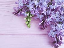 Lilac branch nature decorate on a pink wooden background, frame. Lilac branch on a pink wooden background, frame beautiful nature blossom decorate Royalty Free Stock Image
