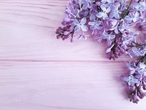 Lilac branch nature decorate on a pink wooden background, frame. Lilac branch on a pink wooden background, frame beautiful nature decorate season Stock Photos