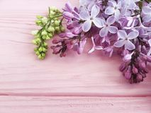 Lilac branch nature decorate summer on a pink wooden background, frame. Lilac branch on a pink wooden background, frame beautiful nature blossom decorate summer Stock Photos