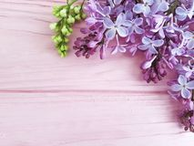 Lilac branch nature decorate season on a pink wooden background, frame. Lilac branch on a pink wooden background, frame beautiful nature blossom decorate season Stock Photos
