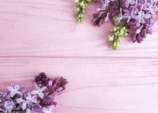 Lilac branch nature on a pink wooden background, frame. Lilac branch on a pink wooden background, frame beautiful nature Royalty Free Stock Images