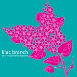 Lilac branch Stock Images