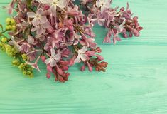 Lilac branch nature spring on a wooden background, frame. Lilac branch on a wooden background, frame beautiful decorate season spring Royalty Free Stock Images
