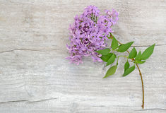 Lilac branch on wooden background stock photos