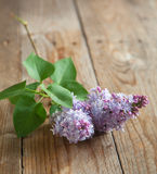 Lilac branch on wooden table. Stock Images