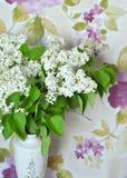 Lilac branco Fotografia de Stock