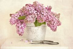 Lilac in the bucket Royalty Free Stock Image