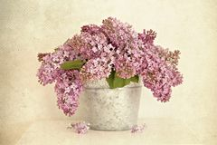Lilac in the bucket Royalty Free Stock Photos