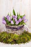 Lilac bunch of tulips Stock Photography
