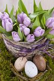 Lilac bunch of tulips Stock Photo
