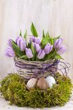 Lilac bunch of tulips Royalty Free Stock Image