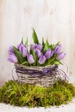 Lilac bunch of tulips Royalty Free Stock Photos