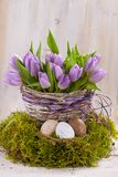 Lilac bunch of tulips Stock Image