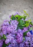 Lilac bush in bloom in the garden. In spring royalty free stock photos