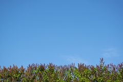 Lilac bush at the bottom of the frame against the blue sky. Place for text. Lilac bush at the bottom of the frame against the blue sky. Place for text royalty free stock photography