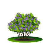 Lilac bush with green leaves and flowers. On white background stock illustration