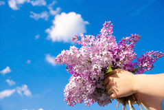 Lilac bush in the hand. Against the blue sky Stock Images