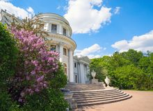 Lilac Bush in the spring Park on the background of Elaginoostrovsky Palace, St. Petersburg. Russia stock image