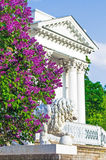Lilac bushes building column palace porch stairs statue Lions park summer leaves flowers trees forest beauty.  Royalty Free Stock Photos