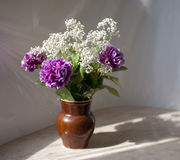 Lilac carnations Stock Photography