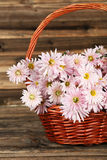 Lilac chrysanthemums in basket on brown wooden background. Stock Photography