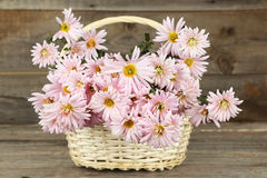 Lilac chrysanthemums in basket on grey wooden background. Royalty Free Stock Images