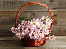 Lilac chrysanthemums in basket on grey wooden background. Royalty Free Stock Photo