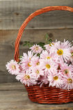 Lilac chrysanthemums in basket on a grey wooden background Stock Images