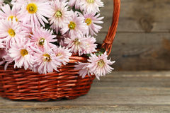 Lilac chrysanthemums in basket on wooden background Stock Photo
