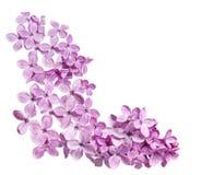 Lilac Corner Stock Image