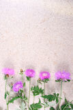 Lilac cornflowers on stone Royalty Free Stock Image