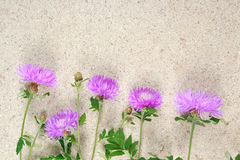 Lilac cornflowers on stone Royalty Free Stock Images