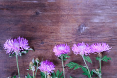Lilac cornflowers on vintage wooden Stock Image