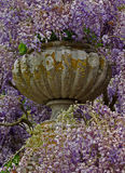 Lilac covered stone decorative vase Royalty Free Stock Photo