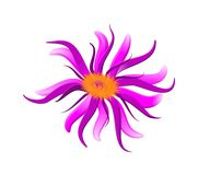 Lilac da flor Ilustração do Vetor