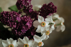 Lilac and daffodils Stock Photography