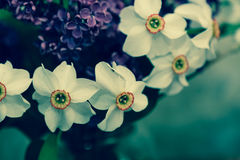 Lilac and daffodils Royalty Free Stock Image