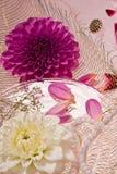 Lilac dahlia Royalty Free Stock Image