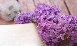 Lilac and dandelions lie on a wooden table next to an open book stock photos