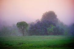 Lilac at dawn royalty free stock photos