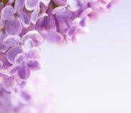Lilac de bloemenachtergrond van de kunst Stock Foto's