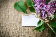 Lilac de florescência Imagens de Stock Royalty Free