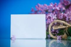 Lilac de florescência Imagem de Stock