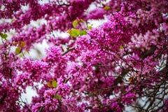 Lilac de lentebloemen - de achtergrond van de de lentebloem Selectieve nadruk Royalty-vrije Stock Afbeelding